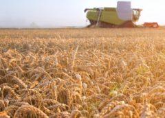 Az IoT tompíthatja a globális élelmiszerválságot